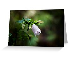 Korean Bellflower Greeting Card