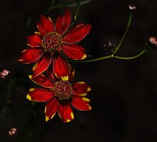 Wild About Flowers by Charles & Patricia   Harkins ~ Picture Oregon