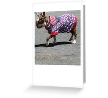 Furry 4th of July  Greeting Card