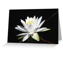 Water Lily in Warren #2 Greeting Card