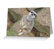 Slender Tailed Meerkat  Greeting Card