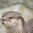 Small Clawed Otter  by BeckiBee