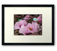 Pink Tree Peonies  Framed Print