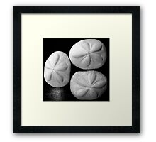 three sea biscuits Framed Print