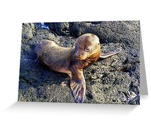 Galapagos Sea Lion Pup Greeting Card