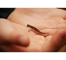 the tiniest chameleon - madagascar Photographic Print