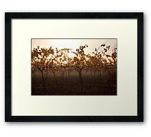 Autumn Fog In The Vineyard Framed Print