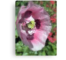 Precious Poppy Canvas Print