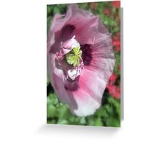 Precious Poppy Greeting Card