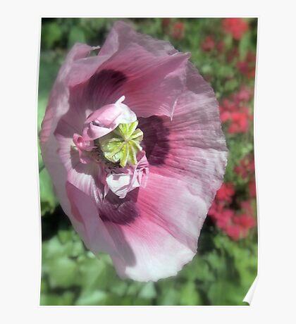 Precious Poppy Poster