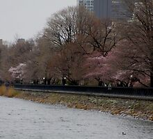 Central Park, NY in Spring by cthomas888