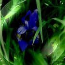 Iris Encased by Debbie Robbins