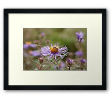 Lady Aster and Guest Framed Print