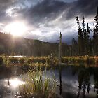 Evening Marsh by Marty Samis