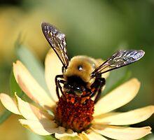 I see honey! by vasu