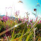 Unnoticed Splendor by jlwinget