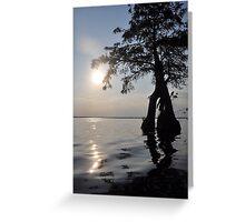Cypress Sun! Greeting Card