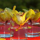 Water Flower! by vasu