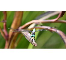 Dragon Fly! Photographic Print