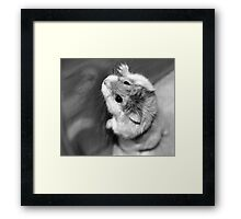 No body likes to be caged!!!!!! Framed Print