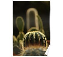 cactus! Poster