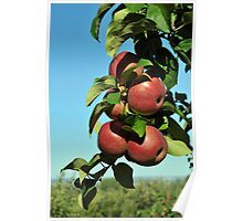 Apples for the Picking Poster