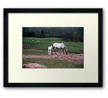 Playful colt Framed Print