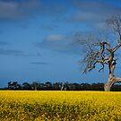 A Yellow Death by Brendan J. Robertson