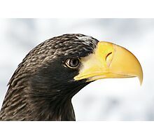 Steller's Sea Eagle  Photographic Print