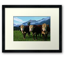 """3 bulls""    flagstaff hereford stud, south westland, new zealand Framed Print"