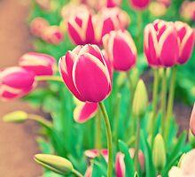 c'est printemps by pdra