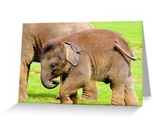Stomping Baby Elephant Greeting Card