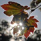 Light on Autumn by Kenneth Haley