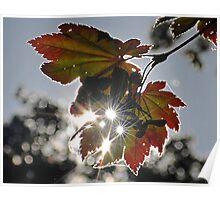 Light on Autumn Poster