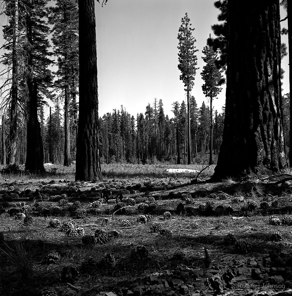 Near Hetch-Hetchy in Yosemite N.P. (7/4/2010) by Rodney Johnson