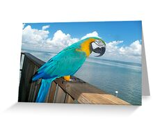Arthur at Stiltsville Greeting Card