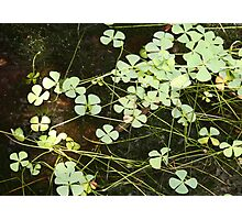 Water Clover Photographic Print