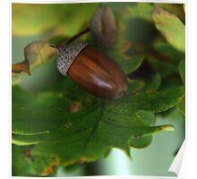 Oak chestnut Poster