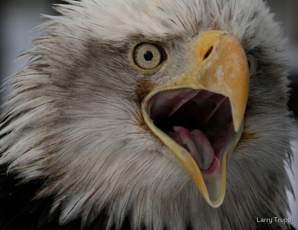 Bald Eagle Talking... by Larry Trupp