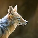Day of the Jackal by Anne Young