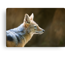 Day of the Jackal Canvas Print