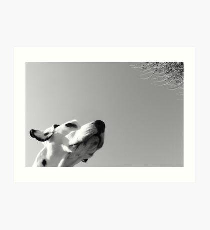 Dali #7 Art Print