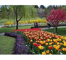 Tulip Tops Gardens - 2 Photographic Print