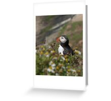 A pensive puffin Greeting Card