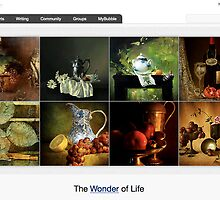 Still Life - 26 September 2010 by The RedBubble Homepage