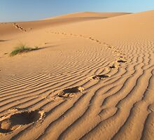 Footprints in the Sand by helenlloyd