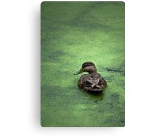 Water Foul Canvas Print