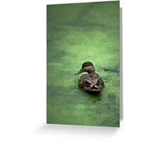 Water Foul Greeting Card
