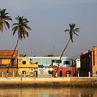 Tilted Palms in St. Louis, Senegal by helenlloyd