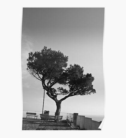 Lonely Tree,Riomaggiore,Italy. Poster